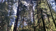1 Muir Woods Rd, Mill Valley, CA 94941